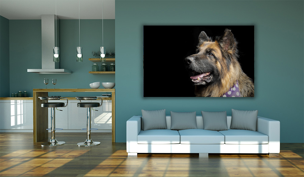 Pet Wall Art