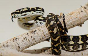 Reptile Photographer